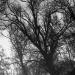 l'arbre est plus fragile...