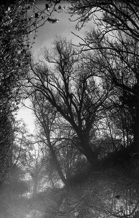 l'arbre est plus fragile que son reflet
